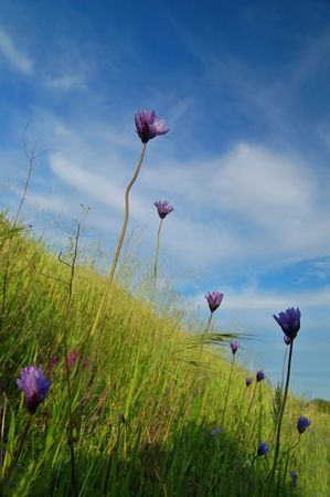 flowery meadow in the spring Stock Photo - 398487