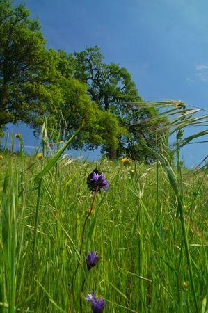 grassy meadow in the spring Banco de Imagens