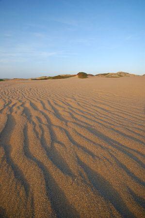 beach dunes at Point Reyes National Seashore, California