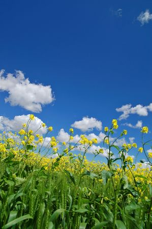 flowery meadow in the spring Stock Photo - 398508