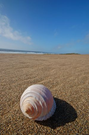 Seashell sitting on the beach