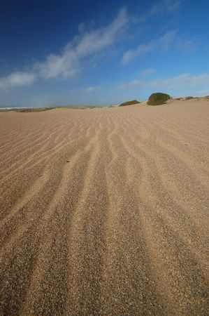 sand dune at Point Reyes national seashore, Marin County, California