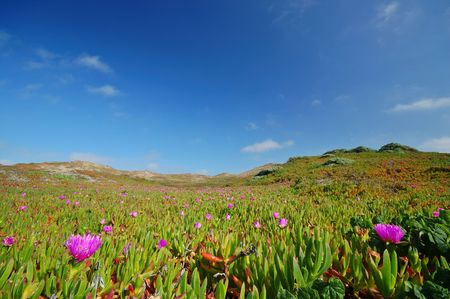 Plants growing on the dunes at Point Reyes, Marin County, California
