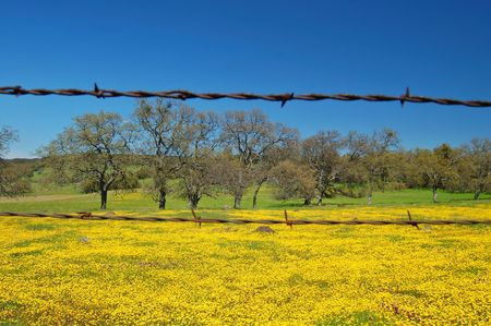 the countryside of northern California in springtime photo