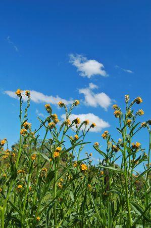 春の草原 写真素材
