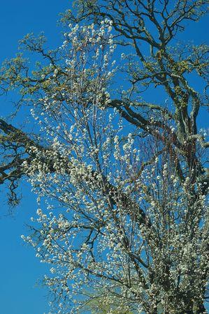 満開の春の花