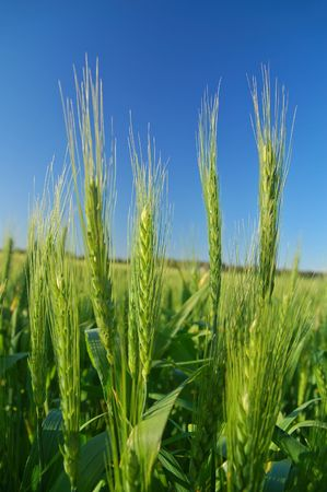 expansive: afternoon field in a farming area Stock Photo