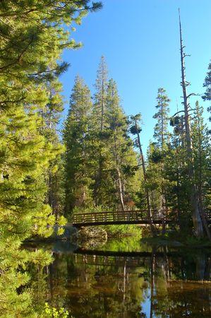 montane: Northern Sierra Nevada mountain range, California, in spring