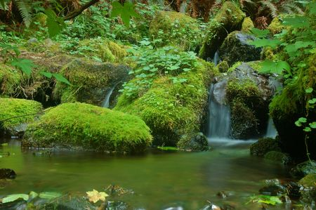 waterfall in a Pacific Northwest forest on the Olympic Peninsula on a wet, cloudy day Stock Photo - 519275