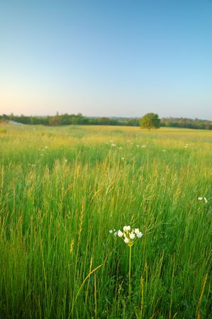 feld: afternoon feld in the summertime Stock Photo