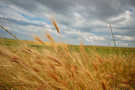expansive: summer field on a stormy afternoon