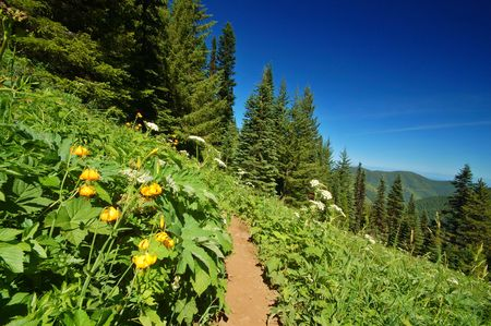 Tiger Lilies, Lilium columbianum , and Parsnip, in Olympic National Park photo