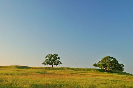 expansive: feld in the summertime