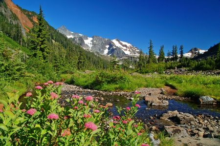 Mountain meadow in the North Cascade mountains of Washington State Stok Fotoğraf