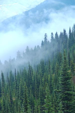 vegatation: Deep in the dark of the Pacific Northwest forest, on the Olympic Peninsula of Washington State Stock Photo