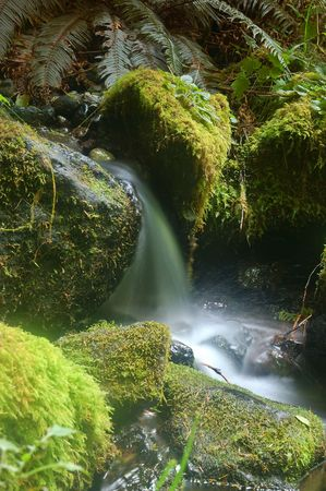 Miniture Waterfall on the floor of the rainforest in Olympic National Park photo