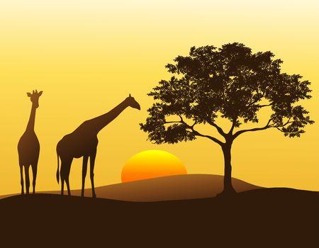 아프리카에서 일몰에 주둔 한 쌍의 기린