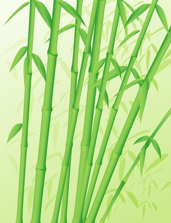 Green forest of bamboo stalks
