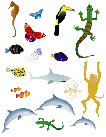 Vector bases illustration of various animals on white background