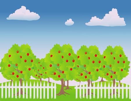 vecteur illustration d'un verger de pommiers  Vecteurs