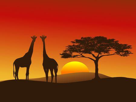 Silhouette of Giraffes on the Serengeti