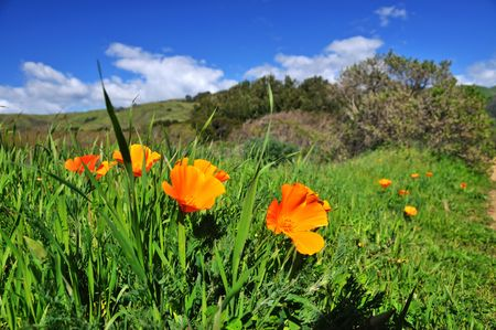 Poppy field in California in the spring time Stock Photo - 4596725