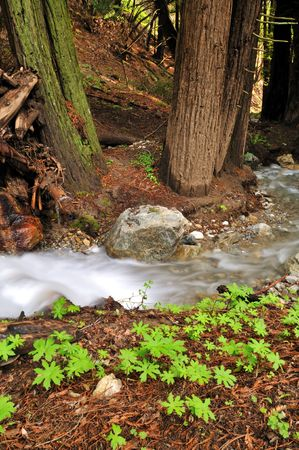 rushing water: rushing water in the forest