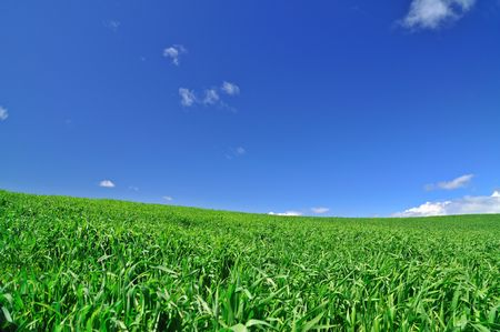 grassy meadow on a spring day photo