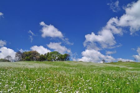 verdant meadow on a spring day Stock Photo - 4730960