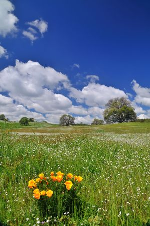 verdant meadow on a spring day photo