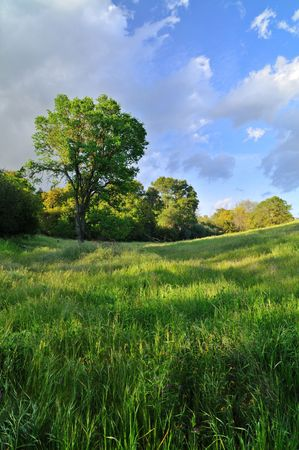 Oak tree against the sunset in a verdant meadow on a spring day Stock Photo - 4739104