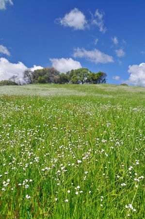 verdant meadow on a spring day Stock Photo - 4739103