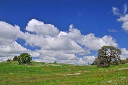 verdant meadow on a spring day Stock Photo - 4759505