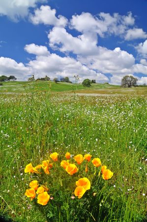 verdant meadow on a spring day Stock Photo - 4759511