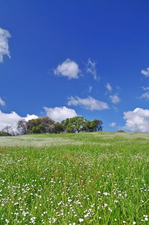 verdant meadow on a spring day Stock Photo - 4759510
