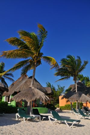 palapa: Palapas and palm trees on a tropical beach in Playa Del Carmen Mexico