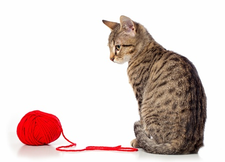 Cute baby tabby cat playing with ball of red yarn on white background  photo