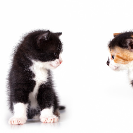 kittens are observed Stock Photo