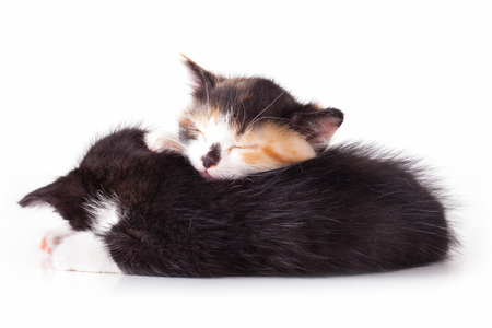 kittens are sleeping photo