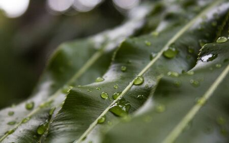 Water drops on green exotic leaf in a rainy day