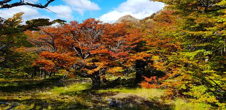 Patagonian autumn colors, trees with autumn colors, Laguna Capri, Argentina