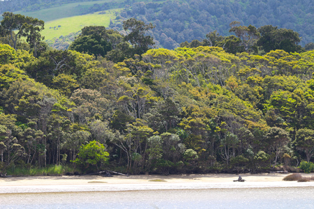 Forest arriving on the beach, The Catlins, South Island, New Zealand