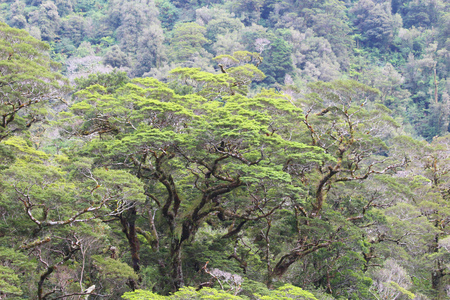 Vegetation of New Zealand. Vegetation along the Doubtful Sound, Fiordland National Park, South Island, New Zealand