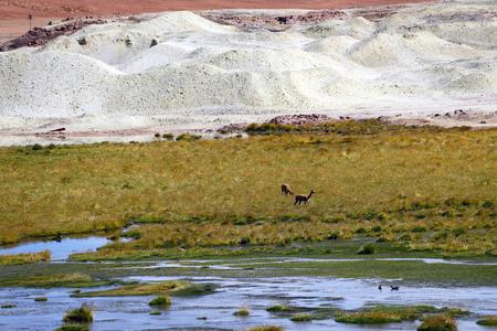 Atacama Desert landscape. Hills of salt and lagoons full of green grass, Rio Putana valley, Atacama Desert, Chile