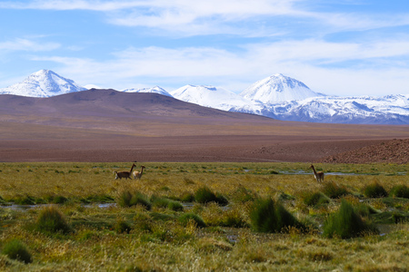 The landscape of northern Chile with the Andes Mountains and volcanoes that are reflected in the lagoons, Atacama Desert, Chile Foto de archivo