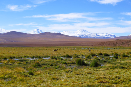 The landscape of northern Chile with the Andes Mountains and volcanoes with snow on the summit, Atacama Desert, Chile 免版税图像