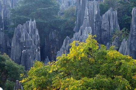 The Stone Forest landscape in Yunnan. This is a limestone formations located in Shilin Karst area, Yunnan, China Banco de Imagens