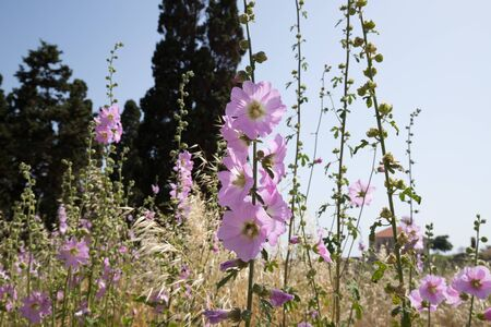 Spring blooms inside the Roman ruins of Byblos, Lebanon - June 2019