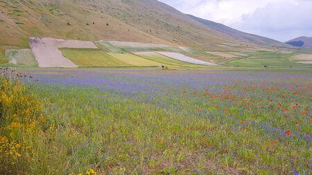Natural landscape of the plain of Castelluccio di Norcia. Apennines, Umbria, Italy Stock fotó