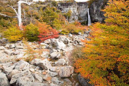Autumn colors of vegetation around the Chorrillo del Salto waterfall, National Park de los Glaciares, Argentina